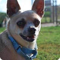 Adopt A Pet :: Eli - Pardeeville, WI