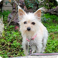 Adopt A Pet :: Glitter - 5 pounds - Los Angeles, CA