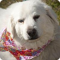 Adopt A Pet :: Katrina - Kyle, TX