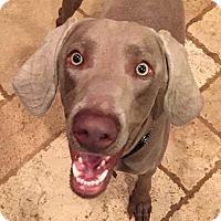 Adopt A Pet :: Jake - Birmingham, AL