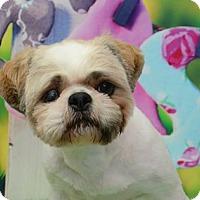 Adopt A Pet :: Arthur Pearland - Urbana, OH