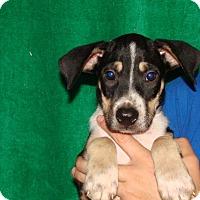 Adopt A Pet :: Falcon - Oviedo, FL