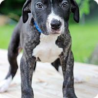 Adopt A Pet :: Branson - Waldorf, MD