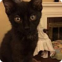 Adopt A Pet :: Hank - Delmont, PA