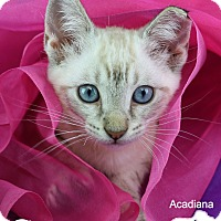 Adopt A Pet :: Cosmo - Carencro, LA