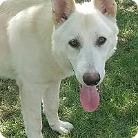 Adopt A Pet :: Kaiser and Kikka - Hagerstown, MD