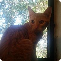 Adopt A Pet :: Gluttony - Ogden, UT