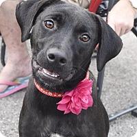 Adopt A Pet :: Marie - FOSTER, RI
