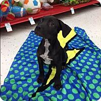 Adopt A Pet :: Ghoo - Saint Augustine, FL