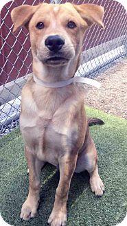 Shepherd (Unknown Type) Mix Dog for adoption in Channahon, Illinois - BamBam