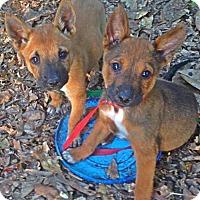 Adopt A Pet :: River - Albertville, MN