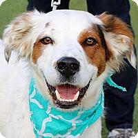 Adopt A Pet :: Jack - Wenatchee, WA