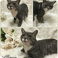 Adopt A Pet :: Alfonzo - Joliet, IL