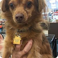 Adopt A Pet :: Jake - Tucson, AZ