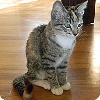 Adopt A Pet :: Emme - san diego, CA