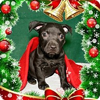 Adopt A Pet :: Irene - Bradenton, FL