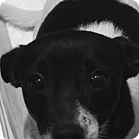 Adopt A Pet :: OTIS - Rancho Cucamonga, CA