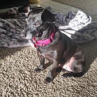 Adopt A Pet :: Maisy - Anaheim, CA