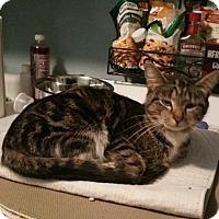 Adopt A Pet :: Lexis - Minneapolis, MN