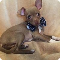 Adopt A Pet :: Cole - Mesa, AZ