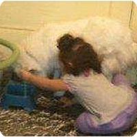 Adopt A Pet :: Ava - Alliance, NE