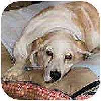 Adopt A Pet :: Eden - Phoenix, AZ
