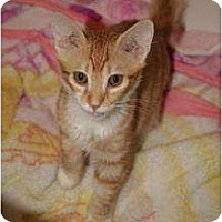 Adopt A Pet :: ronnie - Scottsdale, AZ