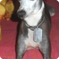 Adopt A Pet :: Dante - Croton, NY