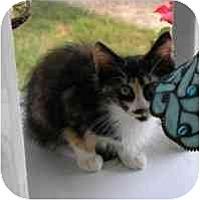 Adopt A Pet :: Harriett - Arlington, VA