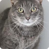 Adopt A Pet :: Neo - Merrifield, VA