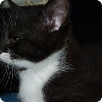 Adopt A Pet :: Fallon - Stafford, VA