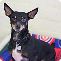 Adopt A Pet :: Thin Mint - Smyrna, GA