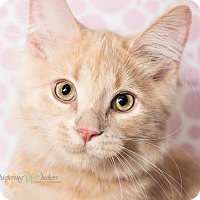 Adopt A Pet :: Peanut - Sterling Heights, MI
