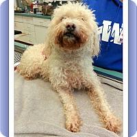 Adopt A Pet :: Adopted!!Sabrina - IL - Tulsa, OK