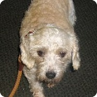 Adopt A Pet :: LUCY - Coudersport, PA