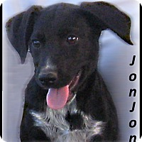 Adopt A Pet :: JonJon- Adoption Pending - Marlborough, MA