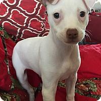 Adopt A Pet :: Amber - Las Vegas, NV