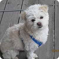 Adopt A Pet :: Timmy - Arvada, CO