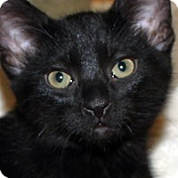 Adopt A Pet :: Brando - Irvine, CA