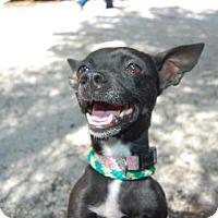 Adopt A Pet :: Mariposa - Bradenton, FL