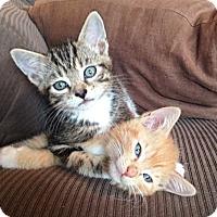 Adopt A Pet :: Peanut, Poppy, & Mocha - Orange, CA