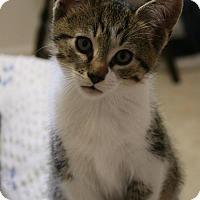 Adopt A Pet :: Sky - Potomac, MD