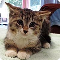 Adopt A Pet :: #2 - Lebanon, PA