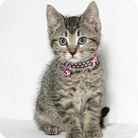 Adopt A Pet :: Ariel - Lufkin, TX