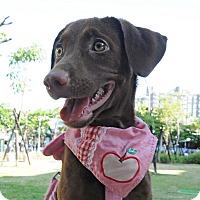 Adopt A Pet :: Julia - Surrey, BC