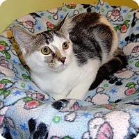 Adopt A Pet :: Smores - Tunica, MS