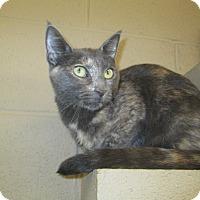 Adopt A Pet :: Treasure - Gadsden, AL