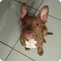 Adopt A Pet :: Etta Mae (JW-CP) - Tampa, FL