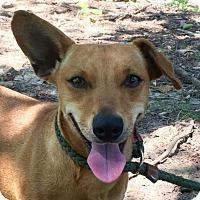 Adopt A Pet :: Riley - Washington, DC