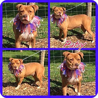 American Pit Bull Terrier Mix Dog for adoption in Charlotte, North Carolina - Patsy